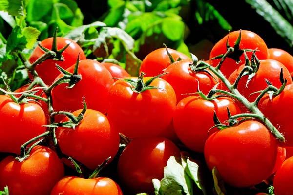 Humor Dá Receita: Molho de Tomate Caseiro